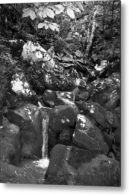 Metal Print featuring the photograph Stream by Curtis J Neeley Jr