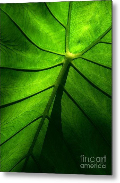 Green Metal Print featuring the photograph Sunglow Green Leaf by Patricia L Davidson
