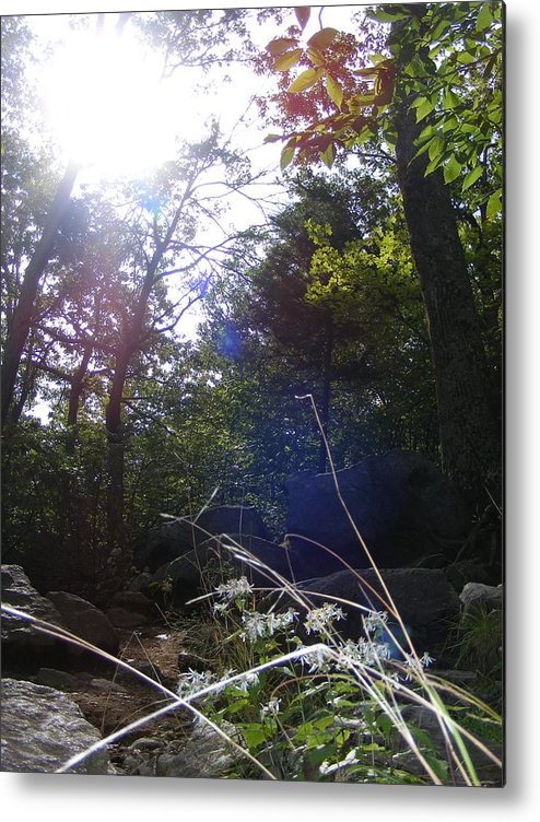 Tree Metal Print featuring the photograph Sunlight On Forest Ground by Alison Heckard