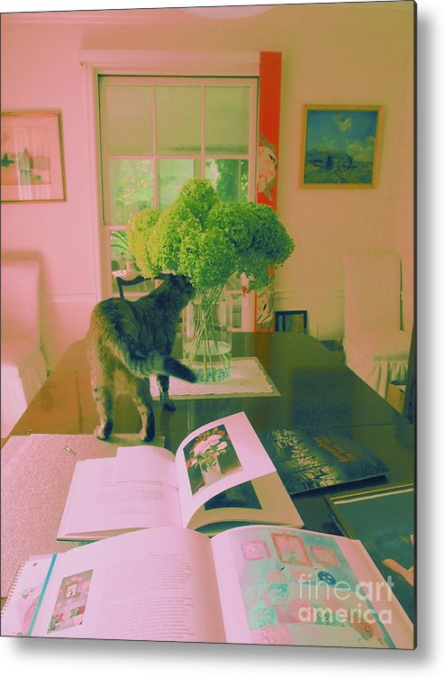 Photography Metal Print featuring the photograph The Cat And The Hydrangea by Nancy Kane Chapman