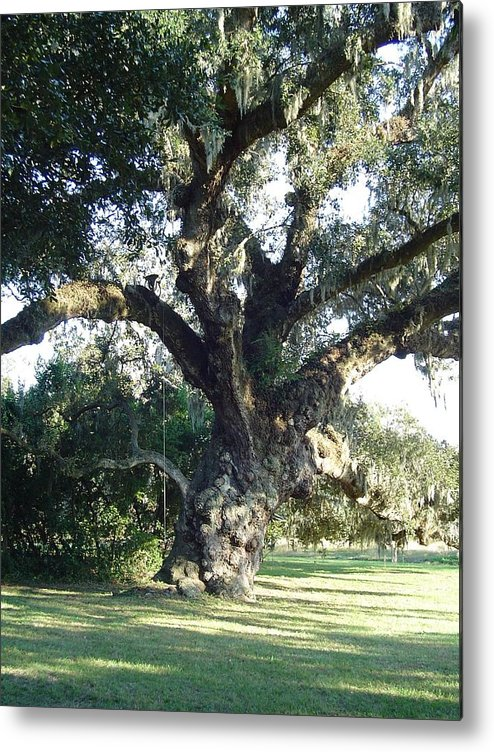 Landscape Metal Print featuring the photograph The Old Oak Tree by Richard Marcus