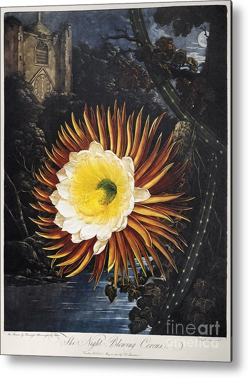 1800 Metal Print featuring the photograph Thornton: Cereus by Granger
