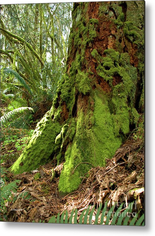 Moss Metal Print featuring the photograph Time Lost by Shari Nees