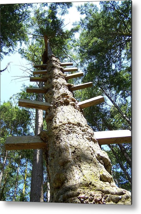 Ladder/ Tree Metal Print featuring the photograph Tree Ladder by Gene Ritchhart