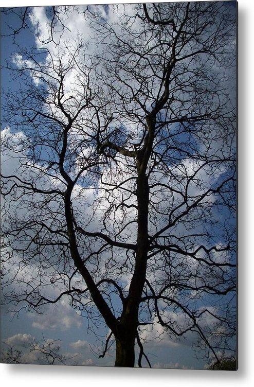 Trees Metal Print featuring the photograph Trees 1 by Helene Champaloux-Saraswati
