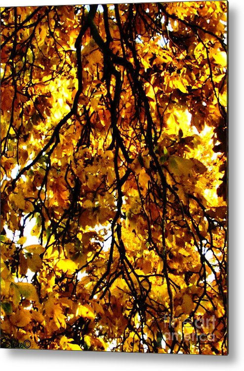 Sun Metal Print featuring the photograph Veins Of Life by September Stone