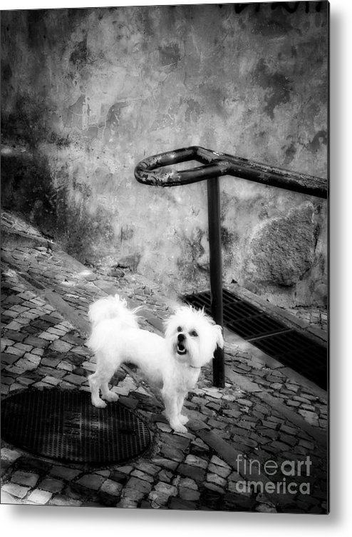 Dog Metal Print featuring the photograph Waiting by Diana Rajala