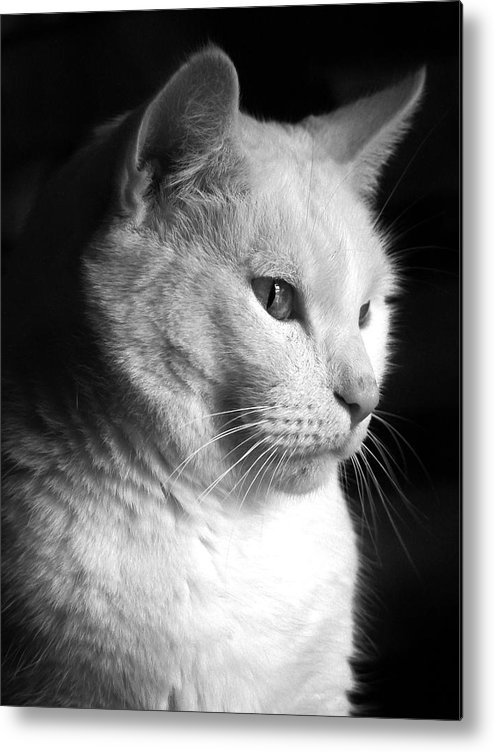 Nature Metal Print featuring the photograph Watchful by Bob Orsillo
