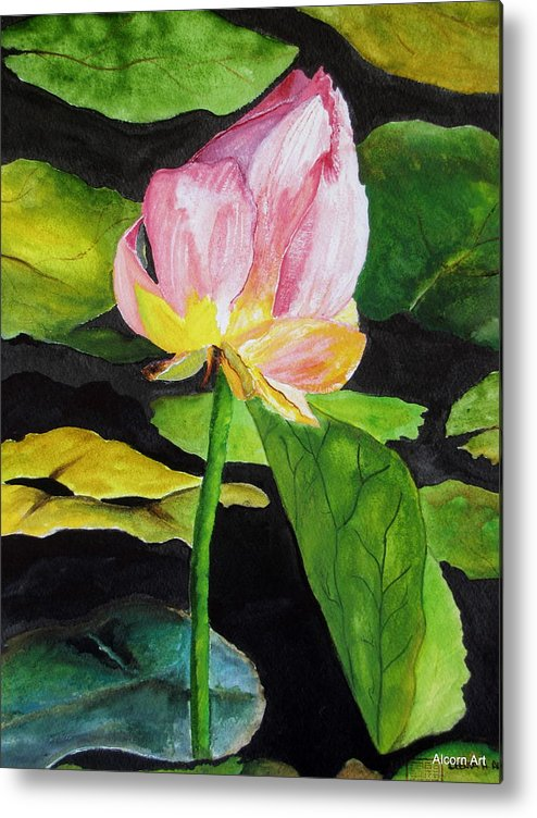 Pond Metal Print featuring the painting Waterlily Watercolor by Brenda Alcorn