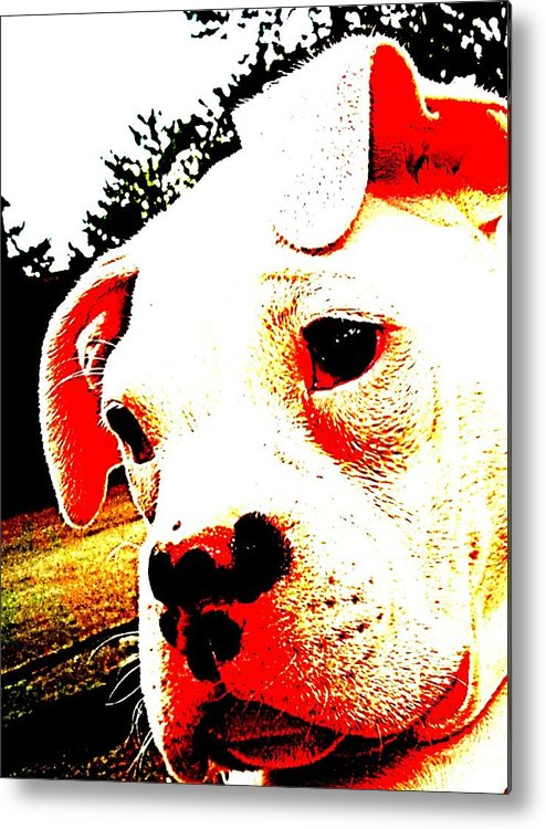 What A Face Metal Print featuring the photograph What A Face by Beth Akerman