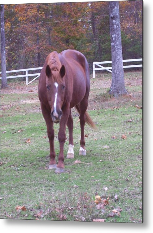 Horse Metal Print featuring the photograph Whiskey by Kristen Hurley