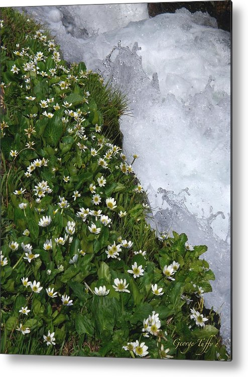 Wildflowers Water Mountain Stream Spring Colorado Rocky Mountains Spring Flowers Rapids White Water Metal Print featuring the photograph White Flowers And Water by George Tuffy