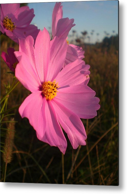 Wildflower Metal Print featuring the photograph Wildflower Greeting The Day II by Wendy Robertson