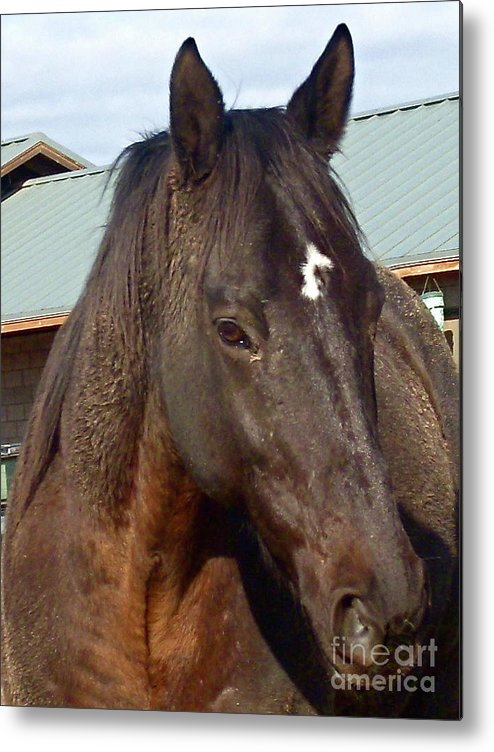 Horse Metal Print featuring the photograph Windows To The Soul by Amy Strong