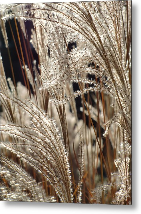 Grass Metal Print featuring the photograph Wisps In The Wind by Richard Mansfield