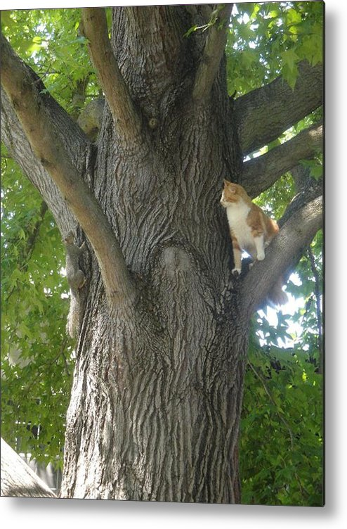 Squirrel Metal Print featuring the photograph You Cant Catch Me by Laura Leigh McCall