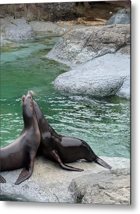 Blue Metal Print featuring the photograph Seal by Aswini Moraikat Surendran