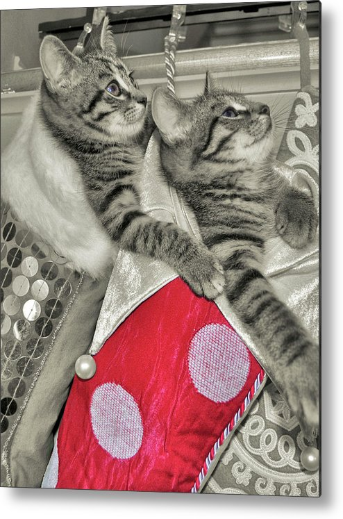 Cat Metal Print featuring the photograph Stocking Stuffers by JAMART Photography