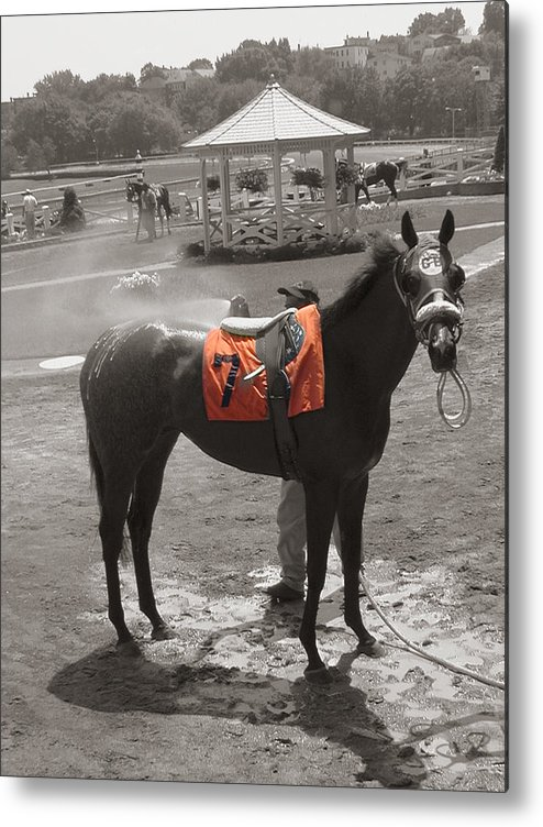 Suffolk Downs Metal Print featuring the photograph Lucky No. 7 by Heather Weikel
