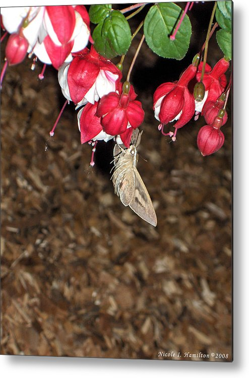 Moth Metal Print featuring the photograph Night Visitor by Nicole I Hamilton