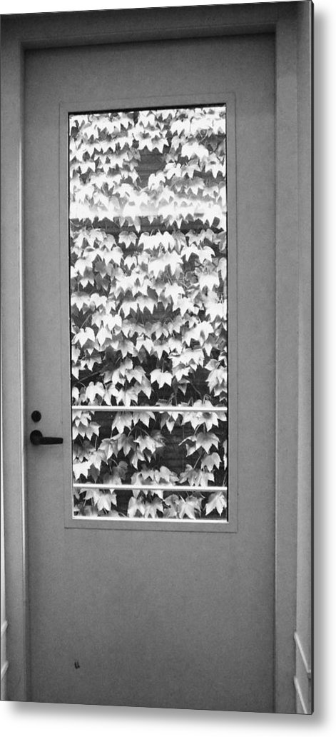 Ivy Metal Print featuring the photograph Ivy Door by Anna Villarreal Garbis