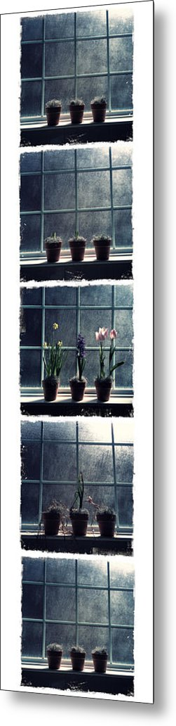 Life Metal Print featuring the photograph Cycle Of Life by Tamara Gentuso