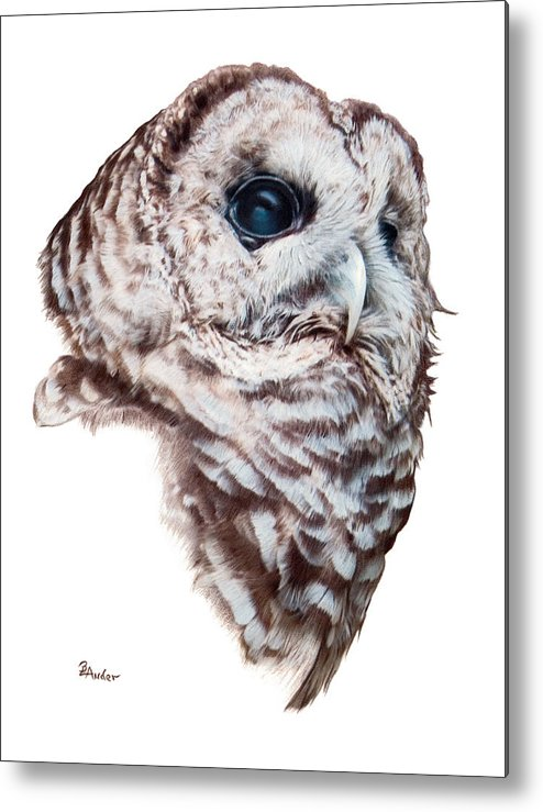 Barred Owl Metal Print featuring the drawing Barred Owl by Brent Ander