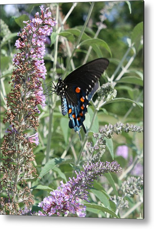 Butterfly Metal Print featuring the photograph Butterfly On Bush by Val Isenhower