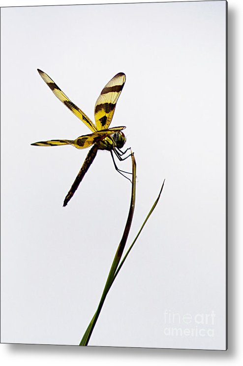 Dragon Fly Metal Print featuring the photograph Holding On by Anne Rodkin
