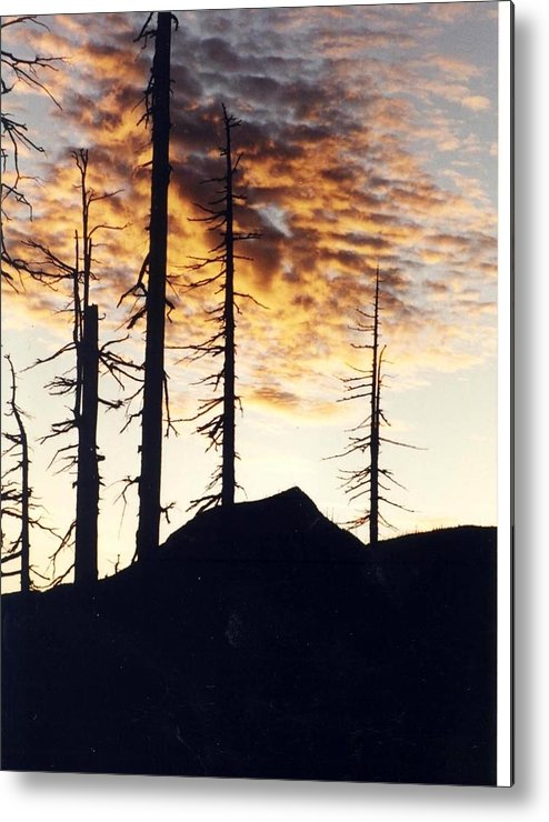 Mountain Metal Print featuring the photograph I Will Survive by Debra Kaye McKrill