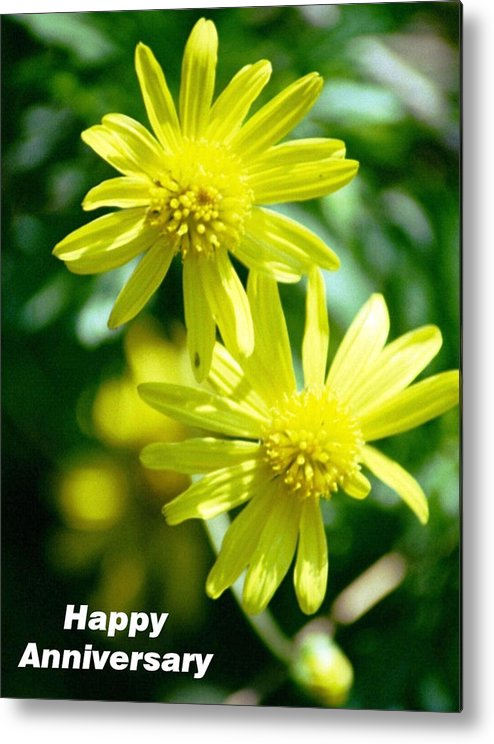 Happy Anniversary Card Of Blooming Metal Print featuring the photograph Loving Daisy Couple by Belinda Lee