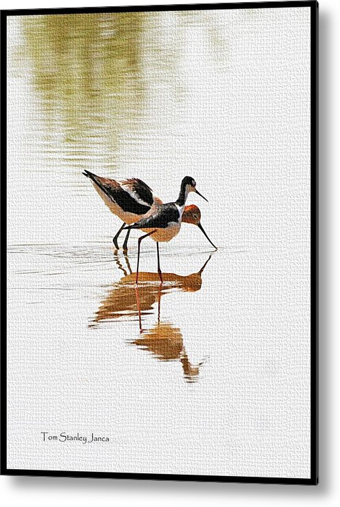 Stilt And Avocet Eat Together Metal Print featuring the photograph Stilt And Avocet Eat Together by Tom Janca