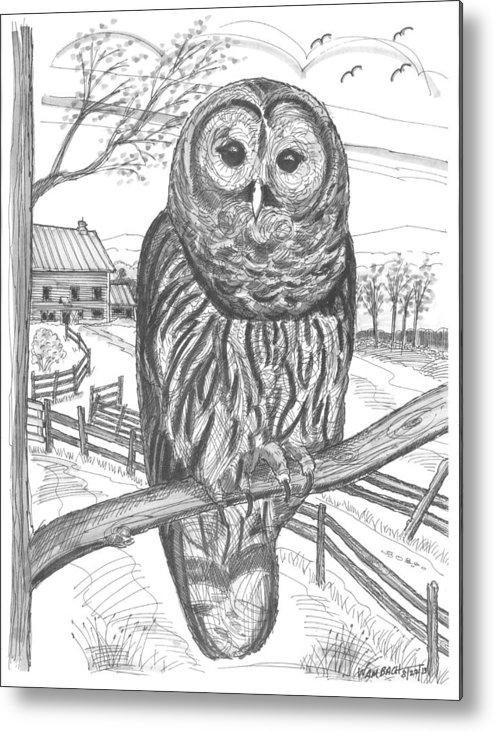 Barred Owl Metal Print featuring the drawing Vermont Barred Owl by Richard Wambach
