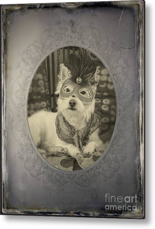 Westie Metal Print featuring the photograph Victorian Westie by Edward Fielding
