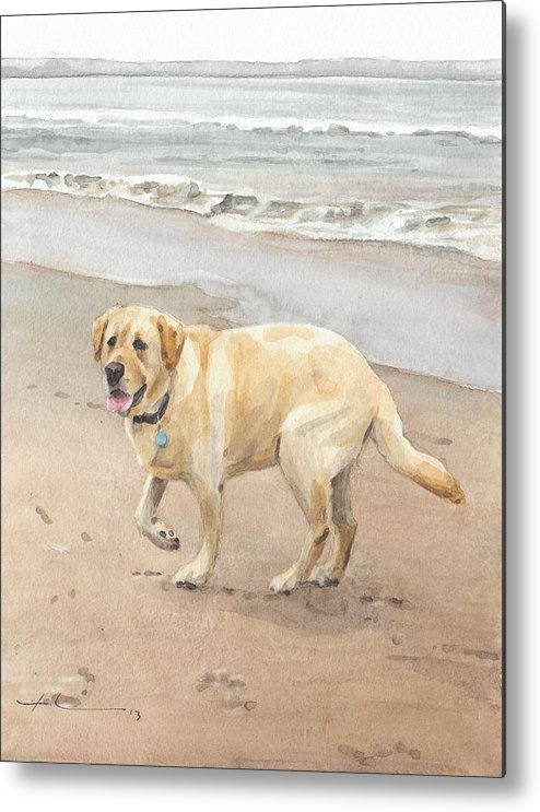 Www.miketheuer.com Yellow Lab On Beach Watercolor Portrait Metal Print featuring the drawing Yellow Lab On Beach Watercolor Portrait by Mike Theuer
