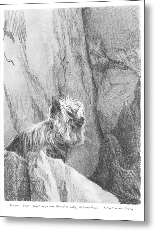 <a Href=http://miketheuer.com Target =_blank>www.miketheuer.com</a> Yorkie Dog On A Cliff Pencil Portrait Metal Print featuring the drawing Yorkie Dog On A Cliff Pencil Portrait by Mike Theuer