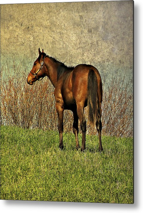 Horse Metal Print featuring the photograph Dreamer by Steve Harrington