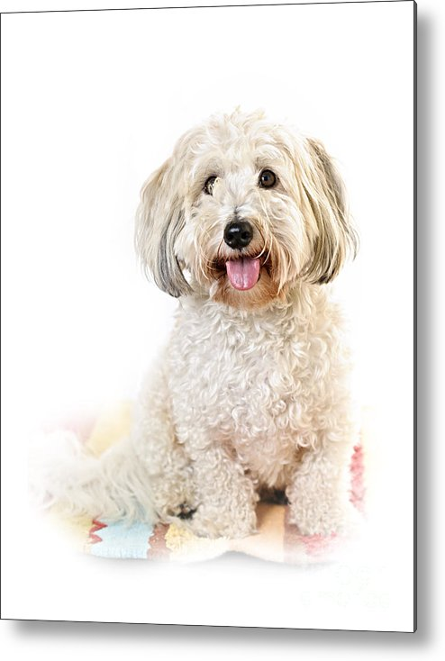 Dog Metal Print featuring the photograph Cute Dog Portrait by Elena Elisseeva