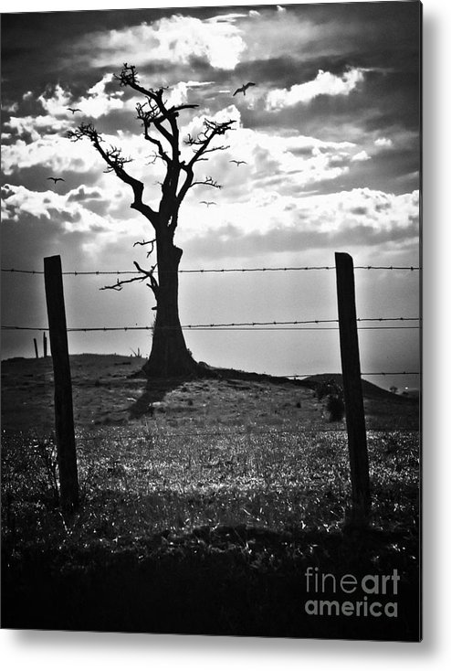 Tree Metal Print featuring the photograph Never More by Madeline Ellis
