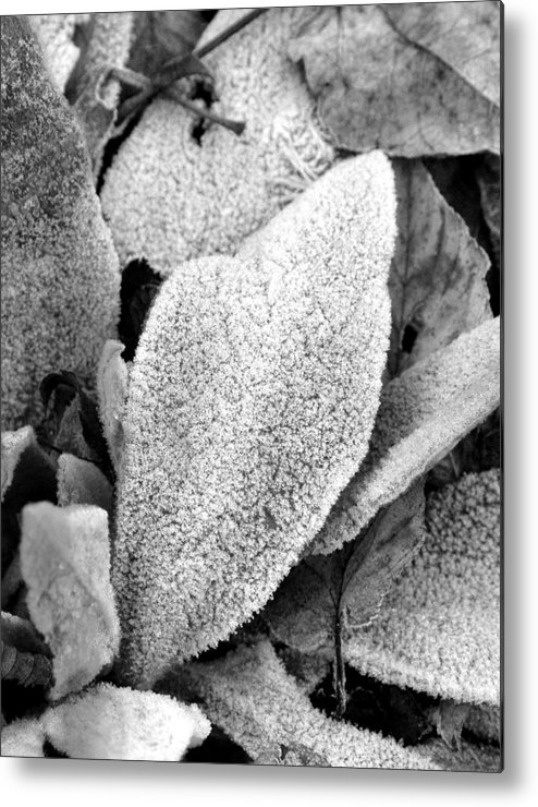 B&w Metal Print featuring the photograph Untitled by Kathy Schumann