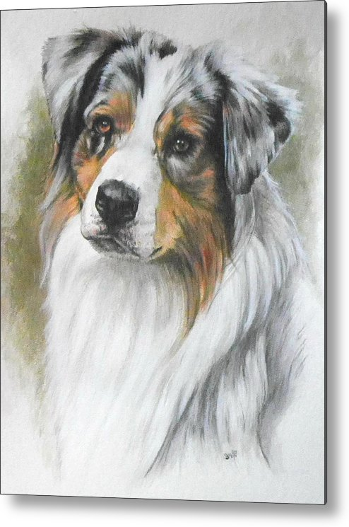 Dog Metal Print featuring the mixed media Aussie Shepherd Portrait by Barbara Keith