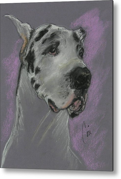 Great Dane Metal Print featuring the drawing Bodhi's Mystique by Cori Solomon