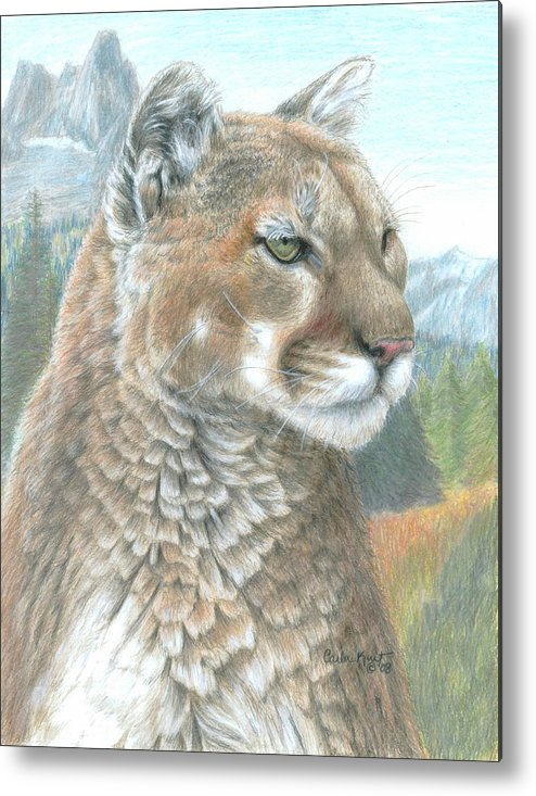 Cougar Metal Print featuring the drawing Cougar 2 by Carla Kurt