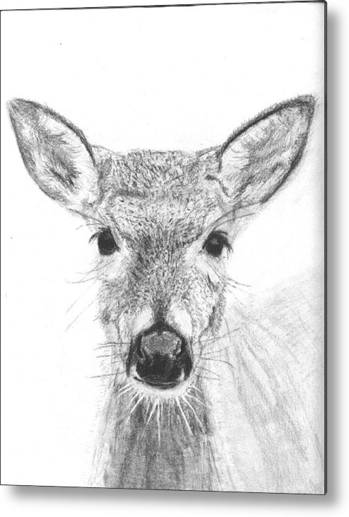 Deer Metal Print featuring the drawing Female White-tailed Deer by Marqueta Graham