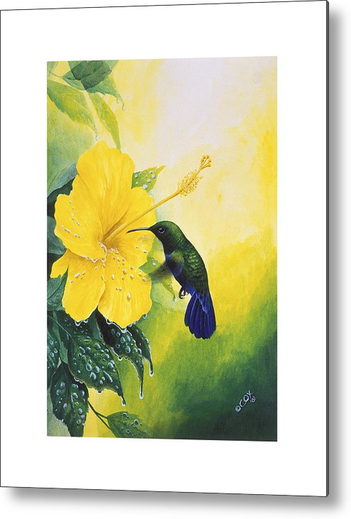 Chris Cox Metal Print featuring the painting Green-throated Carib Hummingbird And Yellow Hibiscus by Christopher Cox