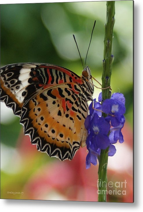 Butterfly Metal Print featuring the photograph Hanging On by Shelley Jones