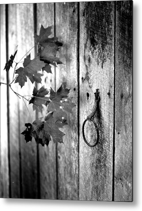 Metal Print featuring the photograph Japton Door by Curtis J Neeley Jr