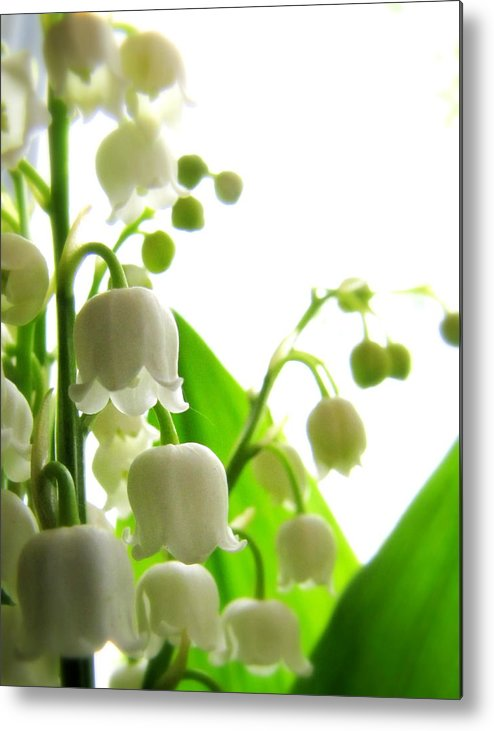 Lilly Metal Print featuring the photograph Lily Of The Valley II by Lisa Jayne Konopka