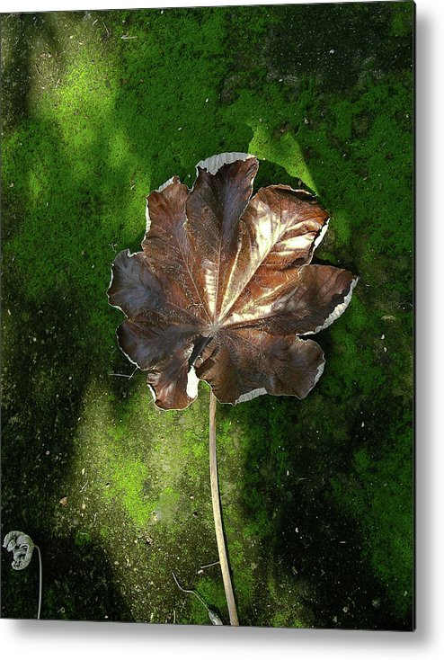 Lonely Metal Print featuring the photograph Lonely Leaf On Moss by Douglas Barnett