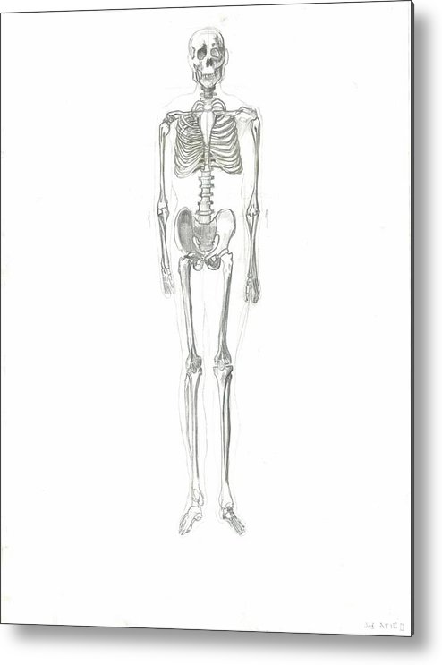 Metal Print featuring the drawing Skeleton by Joseph Arico